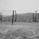 Ostnatý drát, kterým byla obehnána hranice Československa